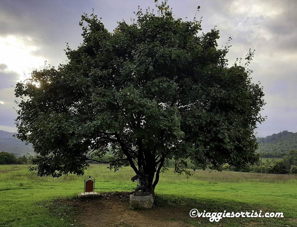 Fraternità di Romena albero