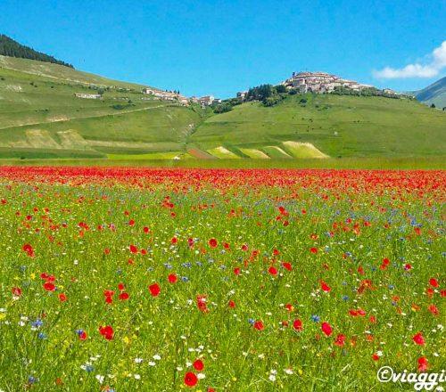 castelluccio-norcia-la-fioritura