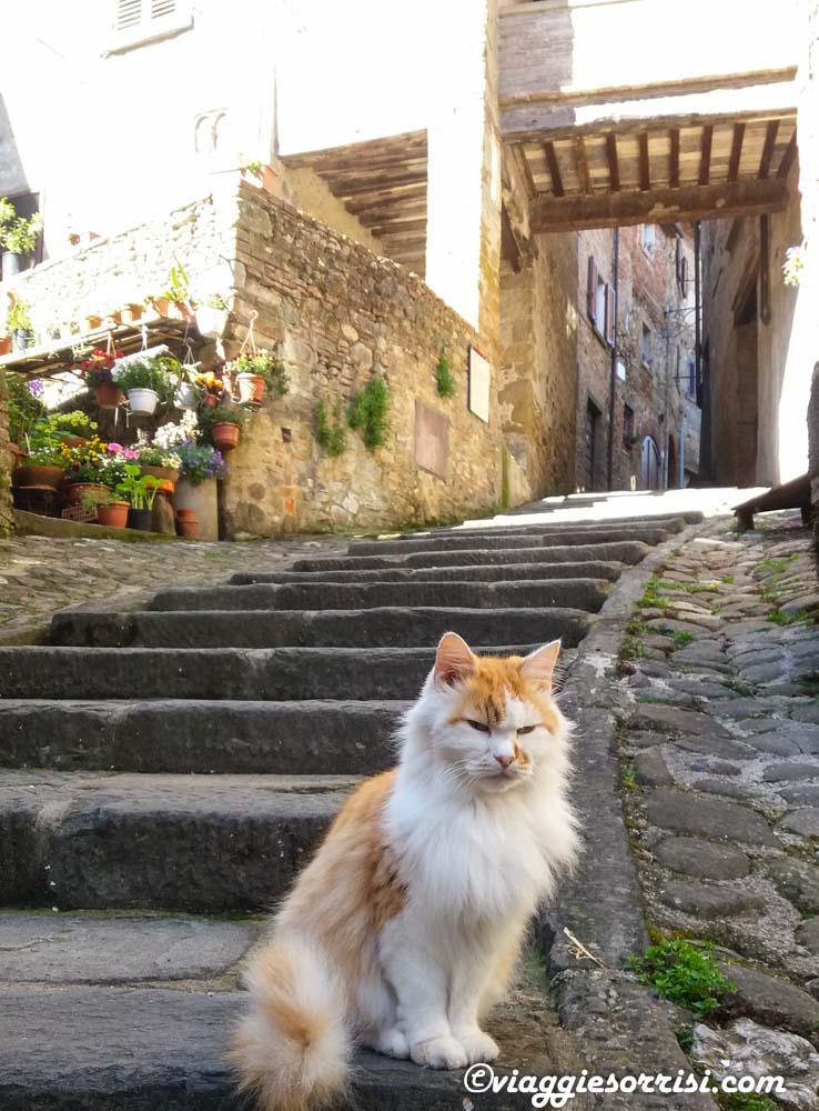 gatto anghiari