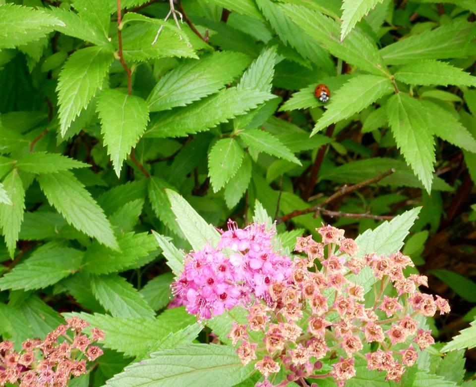 coccinella giardino delle farfalle
