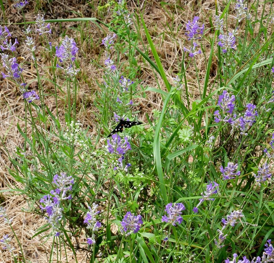 giardino delle farfalle e le sue farfalle