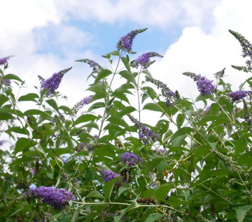 le farfalle al giardino delle farfalle di Cessapalombo
