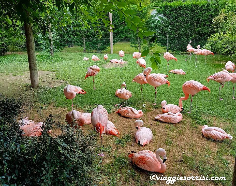 fenicotteri parco zoo punta verde