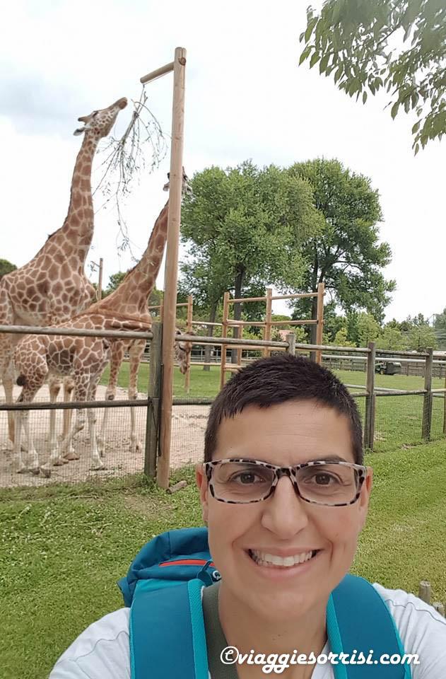 giraffe parco zoo punta verde