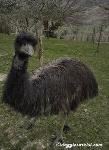 emu fattoria di campagna montecarotto