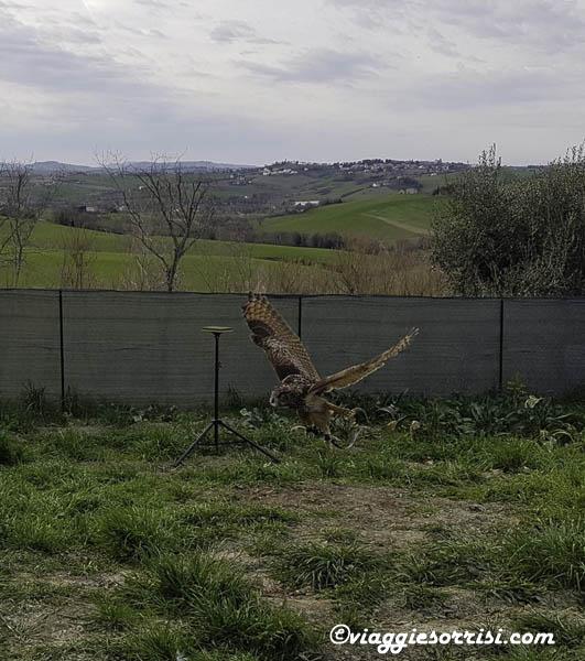 esibizione ali della terra fattoria di campagna di montecarotto