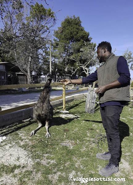 fattoria di campagna emu