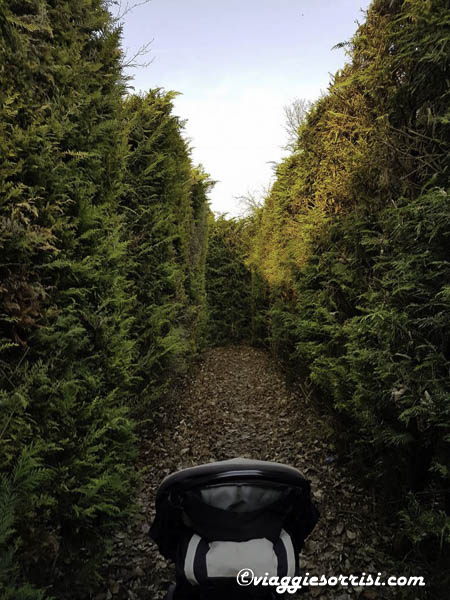 labirinto verde castello del pelagio