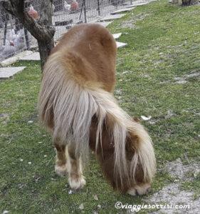 pony fattoria di campagna