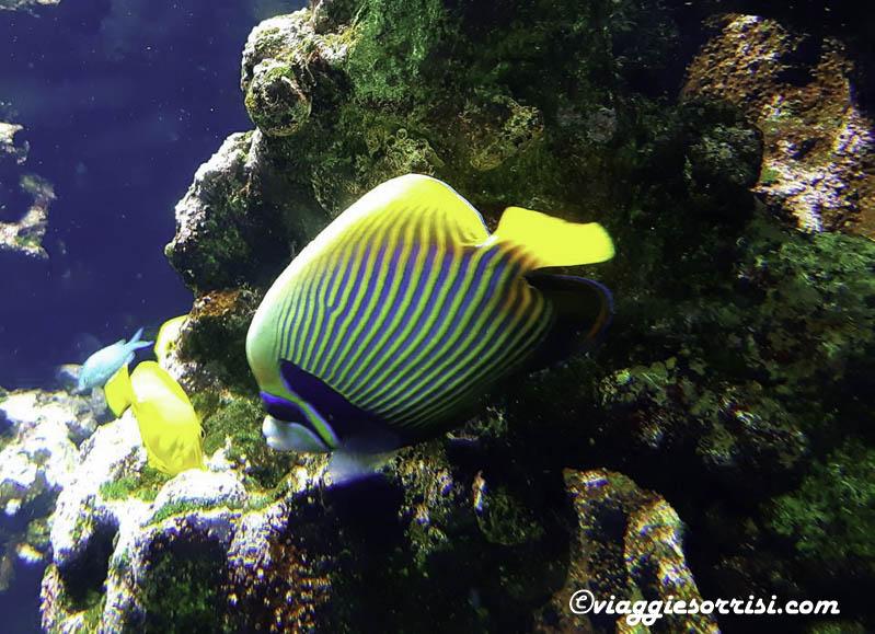 acquario di cattolica pesce