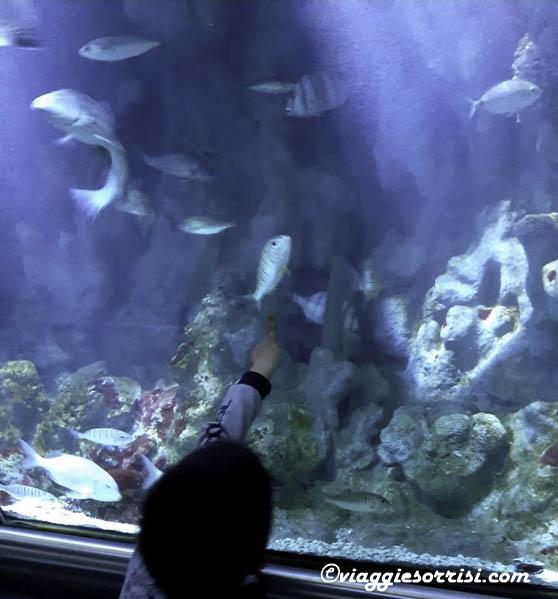 acquario di cattolica visita