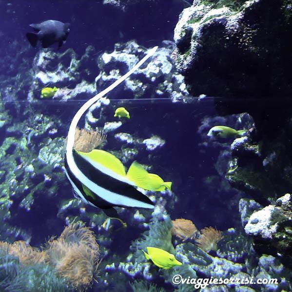 pesce palla acquario di cattolica