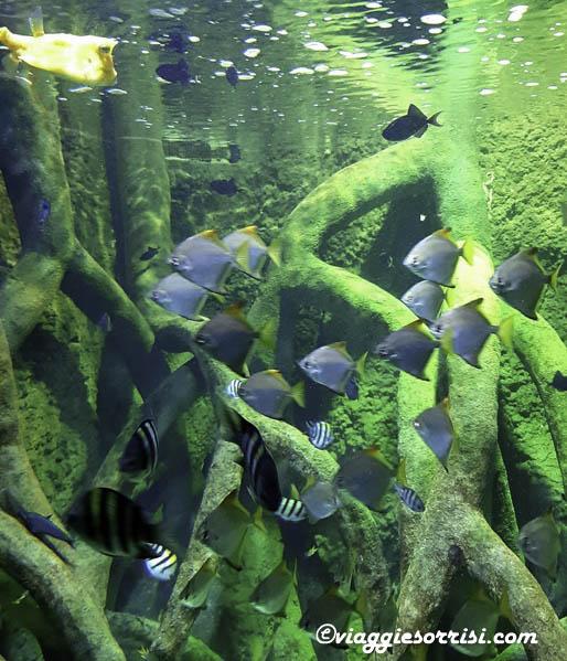 pesciolini acquario di cattolica