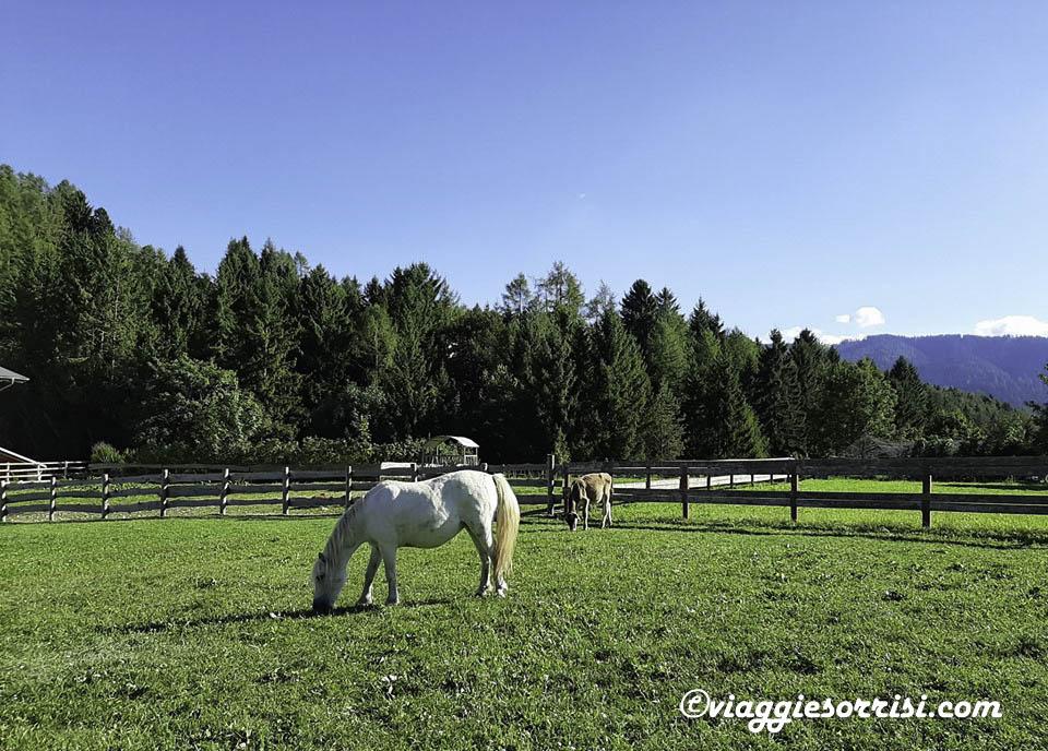 lavarone cavalli