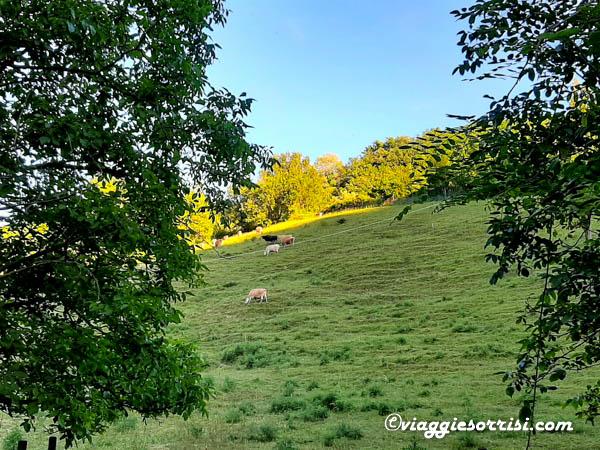 parco e sentiero del trabocco mucche al pascolo