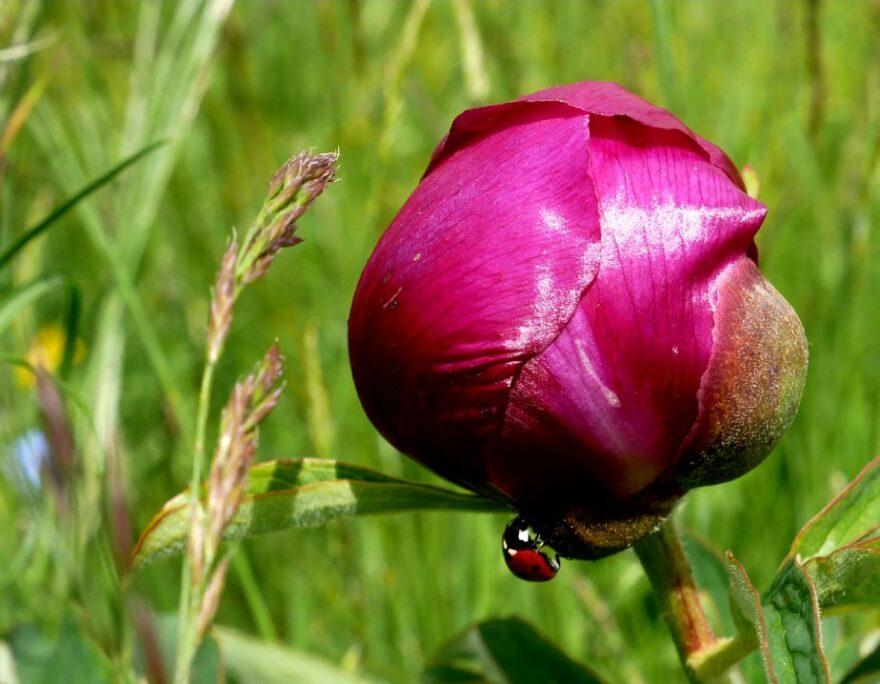 la fioritura ai piani di ragnolo