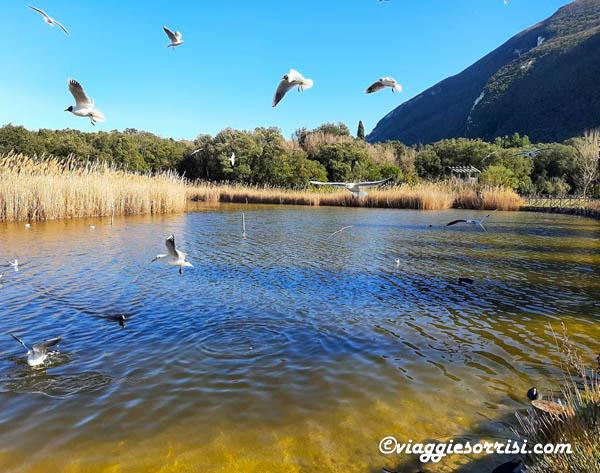 lago portonovo uccelli