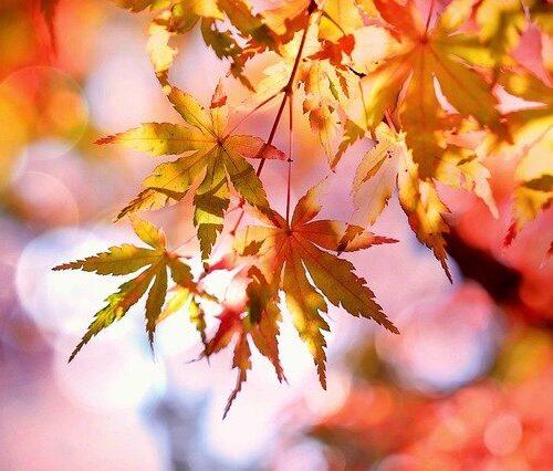 giornate fai autunno marche