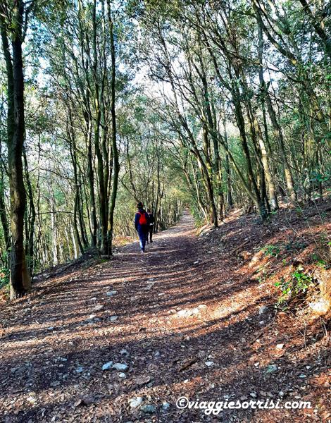 sentiero conero bosco