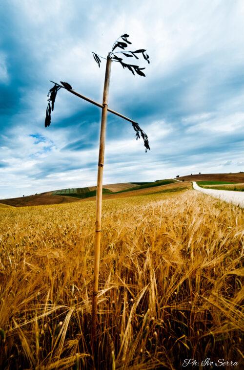 Croci nelle campagne marchigiane - Foto di Ivo Serra